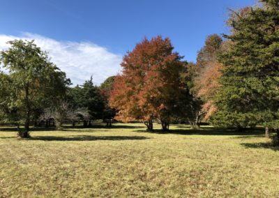 Betseys meadow trees